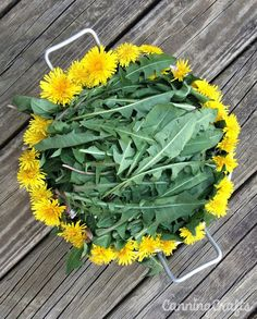 I used eat dandelions now i go camping