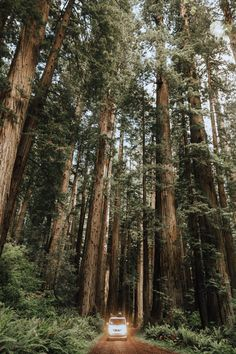 Driving Through Redwood National Park - The Mandagies. California Road Trip  - Pacific Coast Road