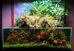 paludarium like aquascape from http://www.plantedtank.net/forums/showthread.php?t=192640