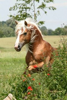 Beauty of the Horse