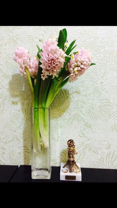 Soft pink hyacinth