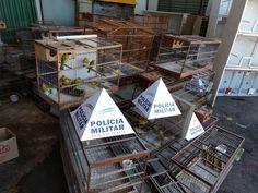 #News  Mais de 100 pássaros usados em rinha são apreendidos em Uberlândia