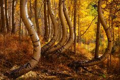 NATURAL CURVES PHOTOGRAPH BY NICO DEBARMORE