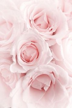Every rose needs rain sometimes