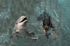 Doberman and dolphin