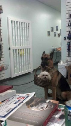 A dog holding another dog in a small basket.