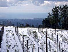 Snow in The Santa Cruz Mountains - Santa Cruz Mountains