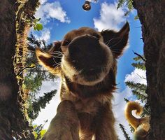 We're digging deep for our #HEROSessionChallenge! This weekend's theme is all about #pets. So be like @timthetoothninja (who buried his #HEROSession) grab your #GoPro, your best friend (🐶) and show us how your #HEROSession can hold up to whatever your furry friend can dish out! #GoPro #GoProPets #Woof #Dogs #dogsofinstagram