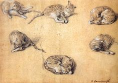 Six studies of a cat, by Thomas Gainsborough 1765-70 Black and white chalk on grey paper, 310 x 447mm Rijksmuseum, Amsterdam