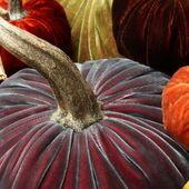 crop velvet pumpkins hot skwash may.jpg