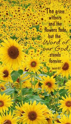The grass withers and the flowers fade, but the word of God stands forever. Isaiah 40:7