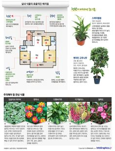 infographics 공기정화 효과에 탁월… 식물 인테리어 노하우 Recycled Crafts, Diy And Crafts, Garden Plants, Indoor Plants, Air Filtering Plants, Biophilic Architecture, Love Garden, Edible Plants, Green Building