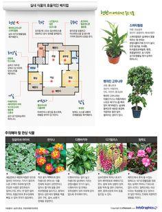 infographics 공기정화 효과에 탁월… 식물 인테리어 노하우