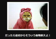 大喜利 猫15