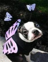 The cutest pet #Halloween costumes!
