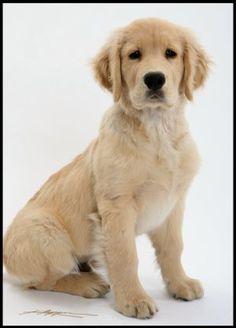 puppi, dog