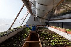 pit greenhouse/walipini - definitely want to do one of these to have year-round vegetables! awesome!