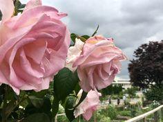 Ikebana, Leaves, Rose, Flowers, Plants, Pink, Plant, Roses, Royal Icing Flowers