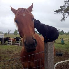 Champy and Morris, a horse and cat duo, are the very best of friends despite the enormous difference in their sizes.