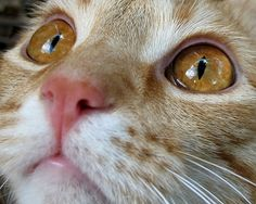 green eyes - Hledat Googlem