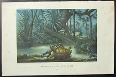 1881 Giant Sea Turtle Tortoise Hunt. Antique Lithograph.
