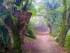 """""""Forest of Witches""""  Camino de Santiago, Spain"""