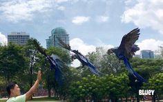 Reach for it! #hyacinthmacaw #parrots #macaws #loro #guacamaya #papagaio #papegøje #papegaai #papagei #pappagalli #papuga #Попугаи #papağan #鸚鵡  #affinityflight #parrot #macaw #guacamayo #arara #perroquet #papagaj #pappagallo #papegøye #Попугай #papegoja #ببغاء #オウム#앵무새 #طوطی #flyingparrots #freeflyingparrots