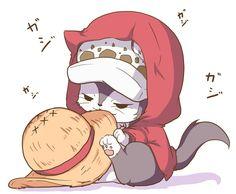 One Piece, Trafalgar Law, cat
