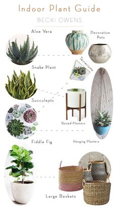 "One of my favorite accessories for any space are beautiful plants. I like to look at them as ""nature's art."" They add color and interest, while livening up a space. There are several ways to display plants and few plants I use often and love to decorate with. I've put together a little inspiration for displaying plants and a simple indoor plant guide."