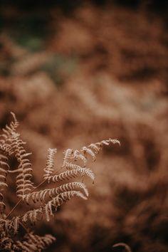 Autumn Leaves photo by Annie Spratt (@anniespratt) on Unsplash