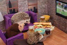 The Adventures Of Humphrey J Hedgehog | Bored Panda THIS IS LITERALLY THE CUTEST THING I'VE EVER SEEN.