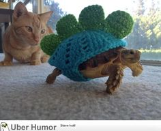 If I had a turtle...this is what it would wear. All the time.