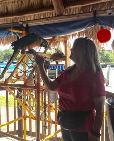 Introducing myself to the host Parrot Nauti Parrot, Marinatown Lane, North Fort Myers, Florida