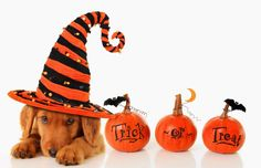9 Halloween Safety Tips for Your Pets