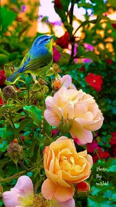 Animals Discover The Beauty of Flowers and Nature in Every Season Most Beautiful Birds, Beautiful Nature Pictures, Beautiful Flowers Garden, Amazing Flowers, Beautiful Roses, Beautiful Gardens, Beautiful Landscape Wallpaper, Beautiful Flowers Wallpapers, Beautiful Landscapes