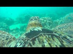 Wonderful Turtle's Eye-View of the Great Barrier Reef