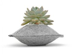 Felt Pods by Flip & Tumble - Compact and fuzzy, the Felt Pods by Flip & Tumble are a unique set of planters that will encourage people to add some greenery to their homes, . Indoor Succulent Planter, Indoor Planters, Hanging Planters, Plants Indoor, Outdoor Plants, Mushroom Plant, Felt Gifts, Grow Bags, Small Plants