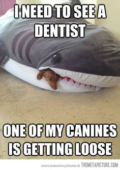 It's FUNNY FRIDAY! Another hilarious funny meme! Click the picture to see 100 more Funny Friday pictures! Haha Funny, Funny Cute, Funny Dogs, Funny Memes, Funny Stuff, Freaking Hilarious, Funny Dentist Memes, Funny Captions, Puns Jokes
