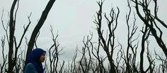 Hutan Mati - Papandayan