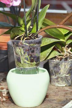 Il y a un vrai hiatus entre la perception que l'on a des orchidées, plante. There is a real hiatus between the perception that we have orchids, plants Diy Garden, Garden Care, Gardening Magazines, Gardening Tips, Gardening Books, Orquideas Cymbidium, Flower Pot Design, Garden Stepping Stones, Small Backyard Landscaping