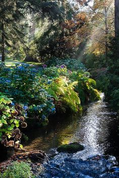 Bodnant Gardens - The Dell by alh1 on Flickr. From earth-witch on Tumblr