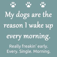 My dogs are the reason I wake up every morning. Really freakin' early.  Every. Single. Morning.