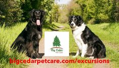 Does your dog need more than just a regular walk? We can help with that! One of our Exclusive Excursions offerings is a Trail Walk Adventure! We use 20 and 30 foot leads, so your dogs can run, snifff, and explore to their heart's content! We pick your dogs up from home and take them to either our favorite trails, or your favorite dog-friendly trail. We offer 30 or 60 minutes on the trails, so please leave time for travel to and from the trail. Starting at only $5 more than a regular dog… Dog Minding, Easiest Dogs To Train, Dog Training Techniques, Can Dogs Eat, Pet Boutique, Best Dog Training, What Do You Mean, Happy Puppy, Dog Barking