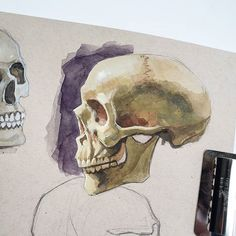 Swipe ➡️ Skull anatomy studies on tan paper. Top left is watercolor, top right is gouache and probably my favorite of the group . Skull Anatomy, Face Study, Anatomy Study, Rhodes, Fashion Sketches, Urban Art, Gouache, Art Tutorials, Art Projects