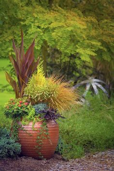 container plant along garden pathway, uncommon container gardens Leafy Plants, Foliage Plants, Garden Structures, Garden Paths, Container Plants, Container Gardening, Chenille Plant, This Old House, Coral Bells Heuchera