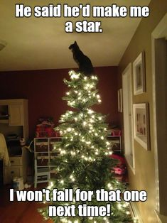 Christmas Star - LOLcats is the best place to find and submit funny cat memes and other silly cat materials to share with the world. We find the funny cats that make you LOL so that you don't have to. Funny Animal Memes, Funny Cats, Funny Animals, Cute Animals, Cats Humor, Funny Horses, Dog Memes, Funny Cat Photos, Funny Animal Pictures