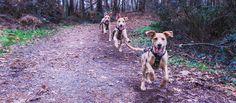 Consultez mon projet @Behance: \u201cPhotoshop photographie dog\u201d https://www.behance.net/gallery/48761743/Photoshop-photographie-dog