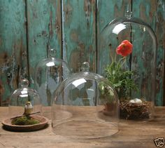Assorted Glass Domes Cloche Bell Jar Doll Clock Cake Cover Display Terrariums @Ruthanne Focht Blanchard