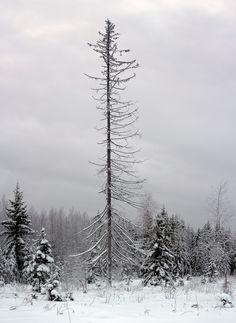 cerceos:  Kari Smolander Finland, 2011