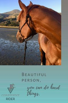 """""""Every horse is a therapy horse, some of them are just freelancing"""" >> Confident Rider - mindset, movement and nervous system awareness for equestrians What Do You Feel, You Can Do, How Are You Feeling, Emotional Resilience, Beautiful Person, Nervous System, Equestrian, Confident, Mindset"""
